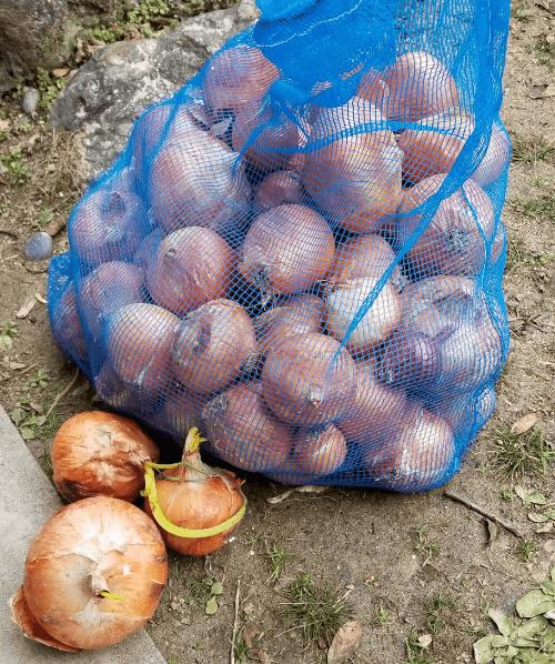 青ネットと玉葱